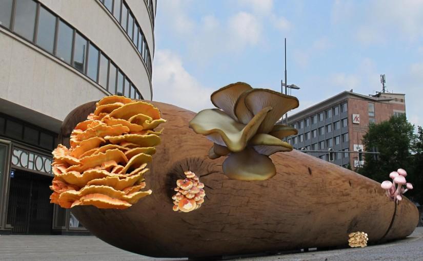 Sichtweise-eines-Pilzfreundes